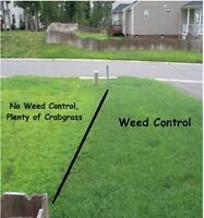 Weed Control Fertilizing and Overseeding