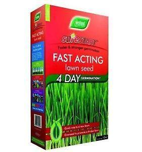 Grass seed ebay for Fast growing tall grass