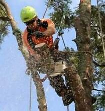 Melbourne Large Tree Specialists Upwey Yarra Ranges Preview