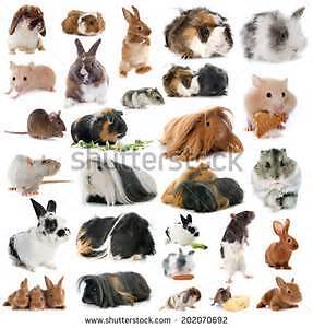 Pet Sitting Plus :)  !!!  :) London Ontario image 5