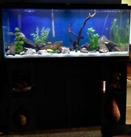 55 Gallon Aquarium With Everything