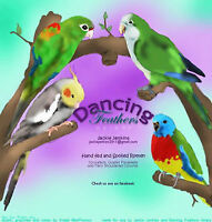 Dancing Feathers Aviary~~Lovebird babies will be ready soon