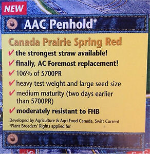 AAC Penhold CPS Certified Wheat