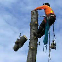 Tree Removal Cutting. Insured.Best price.