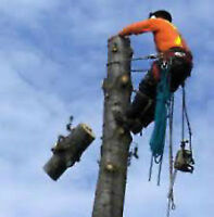 ARBORIST,TREE CUTTING,TRIMMING,PRUNING,STUMP,BRANCH,REMOVAL