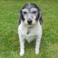 HALDR. Tommy's Story…Ruff Ruff! My name is Tommy