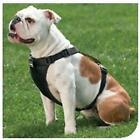 Dog Tether