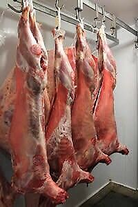 Halal Butcher and grocery shop for sale