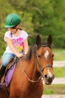 Horseback riding lessons | Introduction to Horses Program