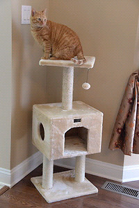 Looking for a cat tree.
