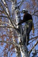 Tree Removal/Limbing/Pruning. FREE QUOTES. FULLY INSURED.