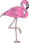 Pink Flamingo of Florida