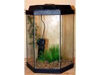 hexagon aquarium with lights and filter