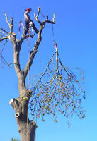 Discount Tree Removal