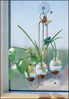 Hanging Plant Rooter