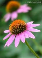 Spring Fundraise with Just Perennials' Plants