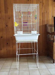 cage a cockatiel
