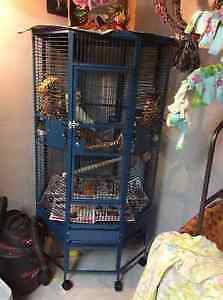 32x 32 blue ocotogon parrot cage reduced to $400.
