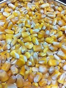 whole corn  50 lb