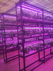 full spectrum LED GROW LIGHTS- T8, ALPHA,  bulbs, Indoor Plants