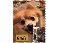 RUDY - R.A.C.R RESCUE