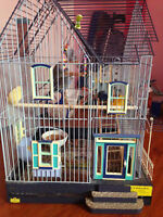 four budgies with big cage