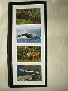 "7 Sets of Newfoundland Pictures $15 each or ""BUY 5 & GET 2 FREE"
