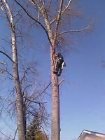 all moore's tree service