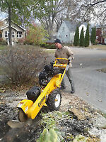TREE REMOVAL / TRIMMING - STUMP GRINDING / REMOVAL