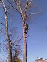 Free estimates for tree removal