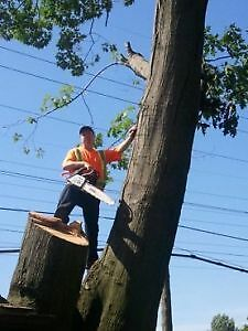 AFFORDABLE TREE REMOVAL & CONTRACTING SERVICE'S Cambridge Kitchener Area image 3