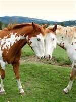 Part time help needed on a Horse Farm