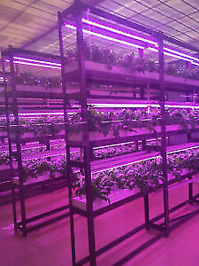 full spectrum LED GROW LIGHTS-T8, ALPHA, bulbs for Indoor Plants