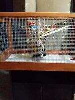 BIRD/RABBIT CAGE WITH CABINET
