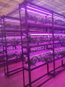 LED GROW LIGHTS- T8, ALPHA, BULB.....