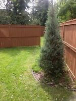 Fences and More, Fence & Deck construction, Painting and more