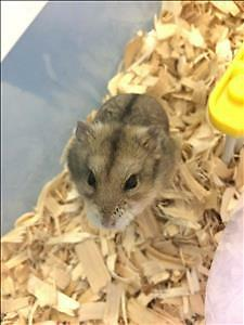 "Young Female Small & Furry - Hamster: ""Today"""