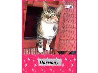HARMONY- R.A.C.R RESCUE