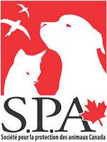 Aidez-nous à combattre la cruauté envers les animaux ! SPA CA