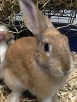 "Baby Male Rabbit - Bunny Rabbit: ""Twix"""