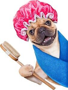 Dog grooming  for $50