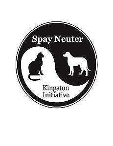 """Tyrion"" - Playful Male Orange & White Kitten Kingston Kingston Area image 7"