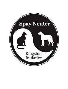 Dexter - Male Orange tabby kitten Kingston Kingston Area image 6