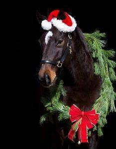 Christmas @ THE TRADING STABLES Officer Cardinia Area Preview