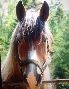 Draft Horse Kijiji Free Classifieds In New Brunswick