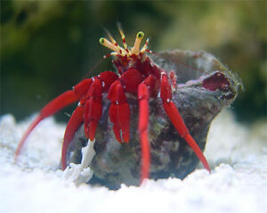 Saltwater hermit crabs, reef sand, fish food and more