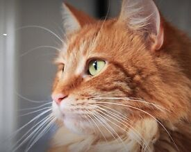 Teacher's Pet cat sitting Glasgow North / West drop-in service