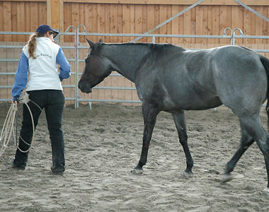 """Is your horse """"the boss of you""""? If your horse is a pushy brat - here's what to do to gain their respect."""