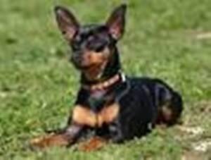 Pension pour chien, garderie en milieu familial pour chien
