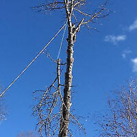 GERRY'S CHEAPEST TREE REMOVAL NO LONG WAIT TO BOOK JOBS